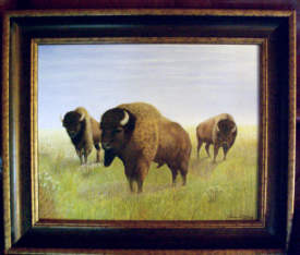 Buffalo Meadow