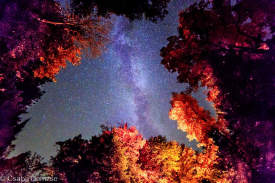 Milky Way seen from the forest