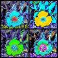 Pansy Quartet Three