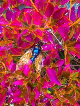 The exquisite  death of a Japanese beetle number one