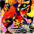 The Tiger edited