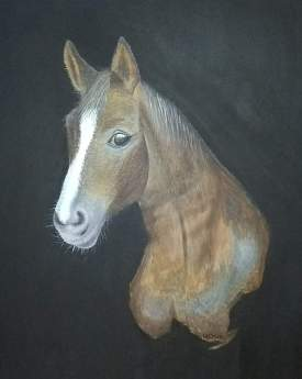 Horse head profile
